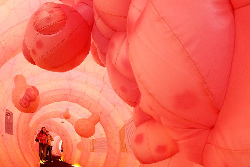 Begehbarer Riesendarm zur Krebsvorsorge in Dresden © dpa - Report