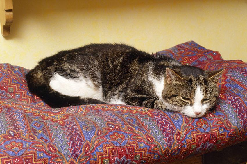 Wenn die Katze zweimal frisst – Demenz trifft alternde Haustiere